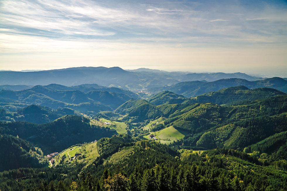 Black Forest.jpg
