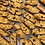 Thumbnail: Chipotle Biscotti