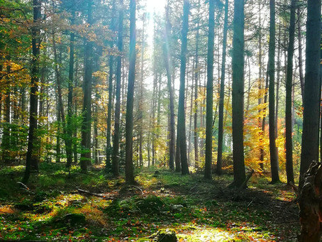 """Home of Trails"" Part1 Bienwald"
