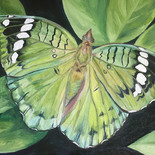 Butterfly Series V - $300