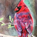 Cardinal - $250