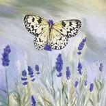 Butterfly Series IV - NFS