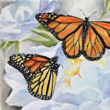 Butterfly Series II
