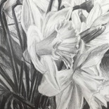 Spring Daffodils - NFS