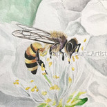 Honeybee on White - $225