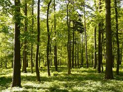 forest_spring_sunlight(1)