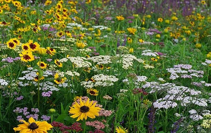 Combe valley wild flowers inspiration.jp