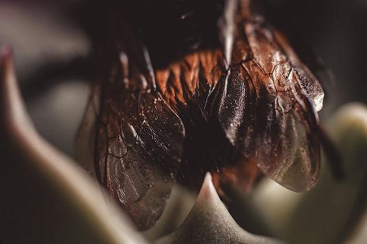 macro-photography-of-bee-4047720.jpg