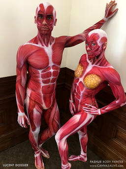 Body Painted Muscular System