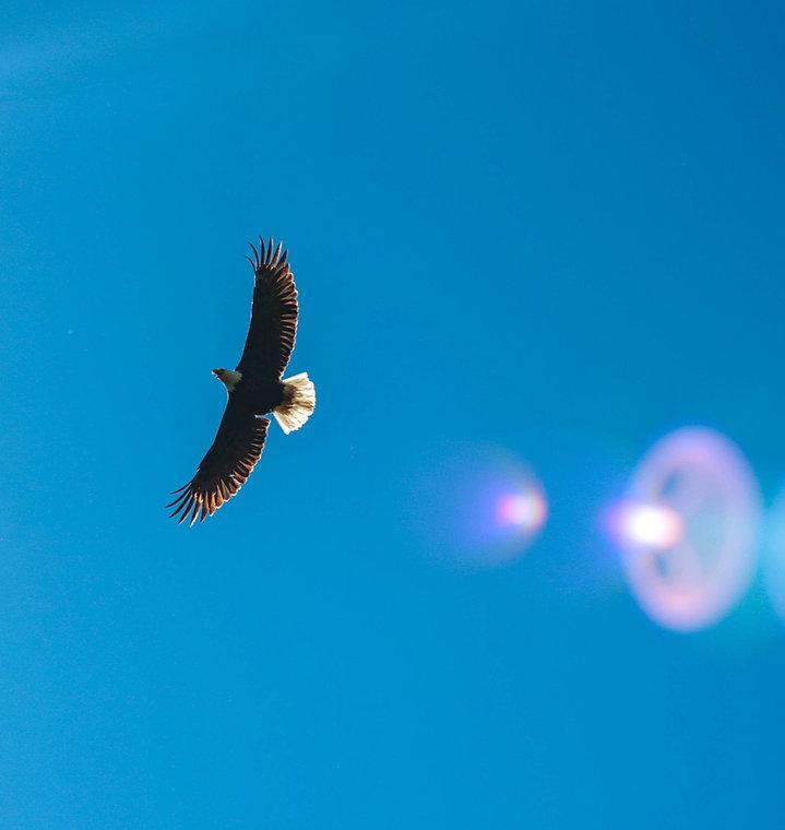 Soar on Wings_edited.jpg