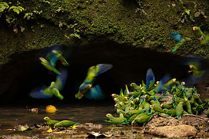 birding-and-photo-ecuador-page-banner-20