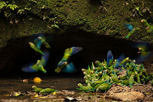 Art of Biodiversity