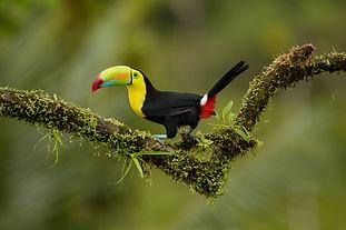 Toucans, Quetzals, & Hummingbirds
