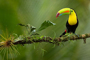 Ultimate Rainforest Photography