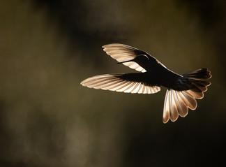 fvt-birds-macro-more-2021-gallery-grid-3