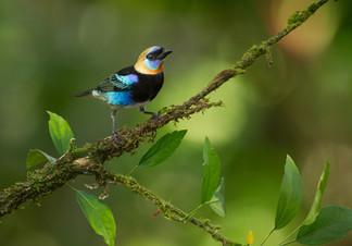 fvt-tropical-nature-setups-cr-gallery-gr