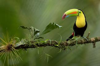 fvt-tropical-bird-photo-ecuador-gallery