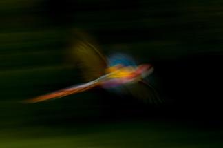 fvt-art-of-flight-cr-gallery-grid-1jpg