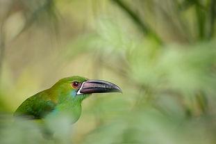 Birding & Photography