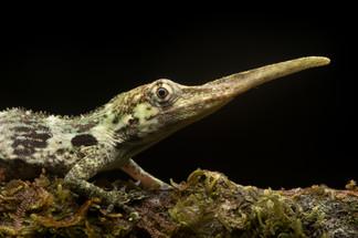 fvt-birds-macro-more-ecuador-gallery-gri