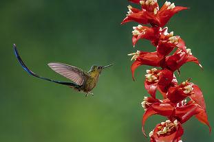 Tropical Bird Photography