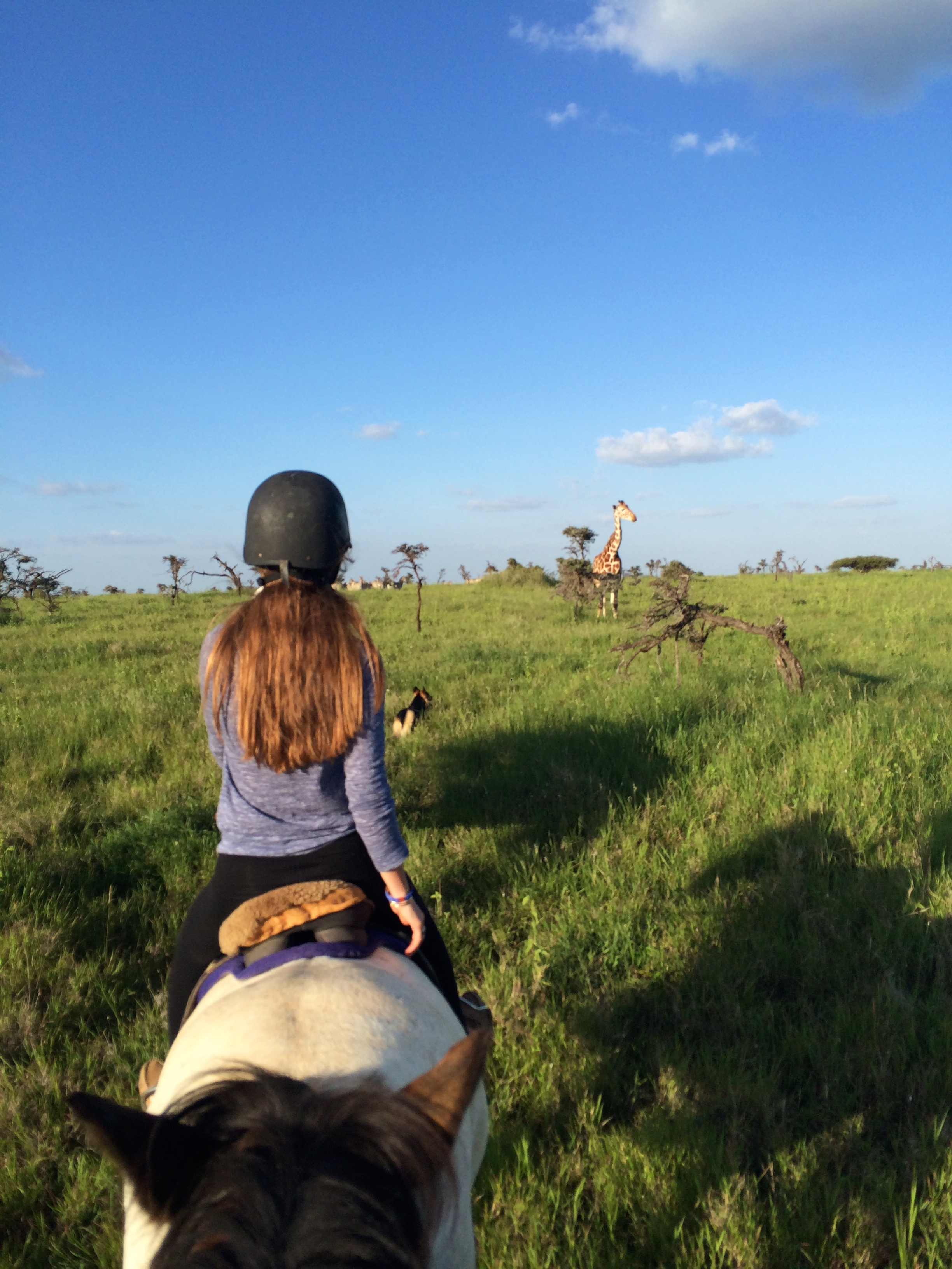 Giraffe Viewing on Horseback