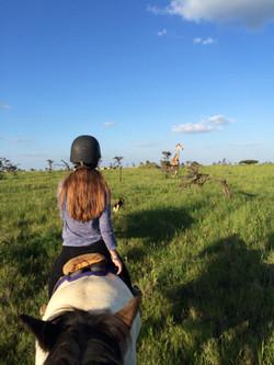 Giraffe Viewing on Horseback
