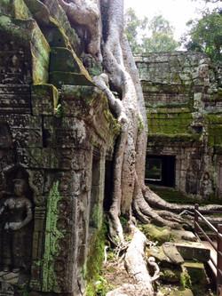 Tree Trunks in Siem Reap