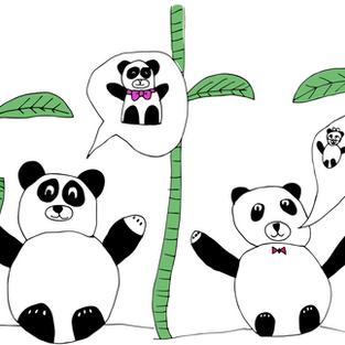 #12 Panda
