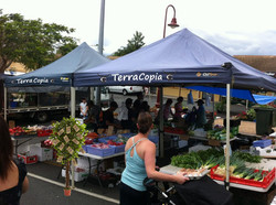 TerraCopia Farmer's Market