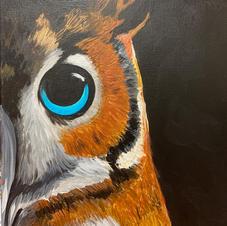 Night Owl Canvas