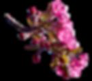 0_e2c21_5f682e84_XL.png
