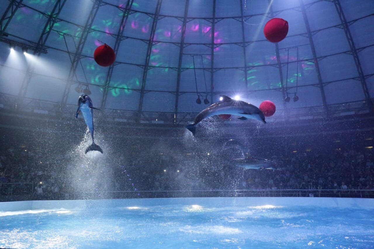 022 Дельфинарий и океанариум
