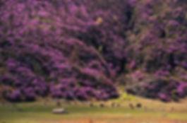 equesto_spring.jpg