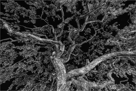 Tree of the Night - Jared Plante.jpg