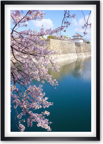 Les Sakuras d'Osaka