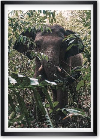 Jungle Thaïlandaise