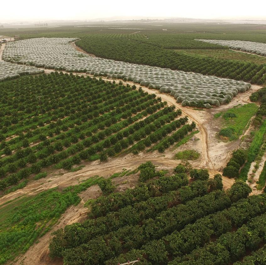 צילום אווירי חקלאי