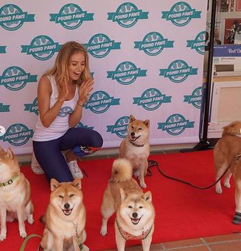 Pound Paws Dog Day at Sydney Uni