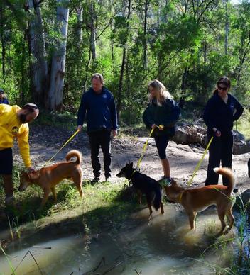 A visit to Dingo Den Animal Rescue
