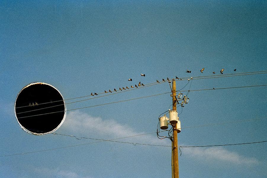 鸟电线-4.jpg