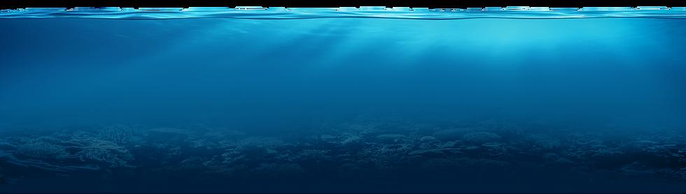 bottom of ocean תחתית הים