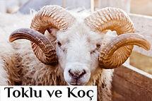 toklu-koc_500x333anasayfa.jpg