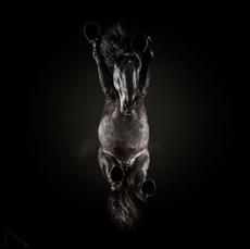 Under-horse
