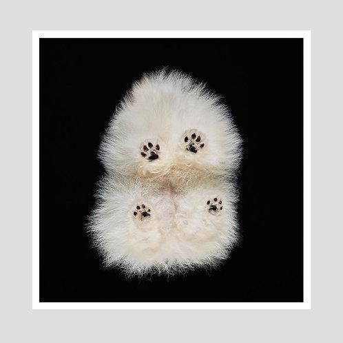 """""""Pomeranian"""""""