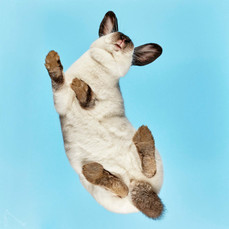 Rabbits-40q.jpg