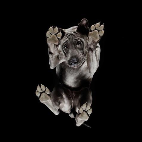 Under-dogs