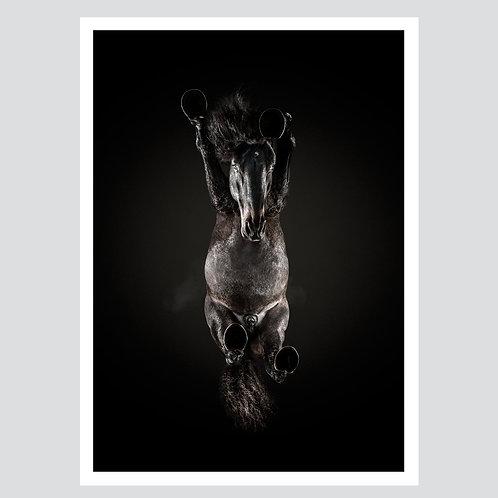 """""""Dark Horse 2"""""""