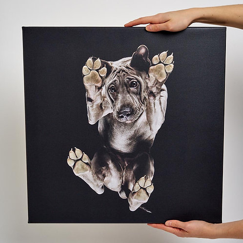Your pets photo on a Canvas