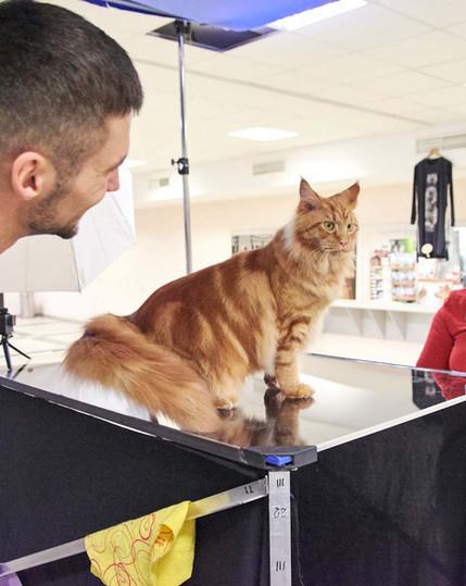 Under-cats colour backstage
